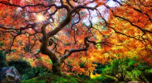 There's A Rare Garden Hiding In Oregon And It's Positively Stunning