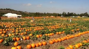 These 8 Charming Pumpkin Patches In Michigan Are Picture Perfect For A Fall Day