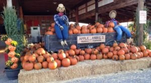 These 11 Charming Pumpkin Patches In Arizona Are Picture Perfect For A Fall Day
