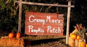 These 11 Charming Pumpkin Patches In Kansas Are Picture Perfect For A Fall Day