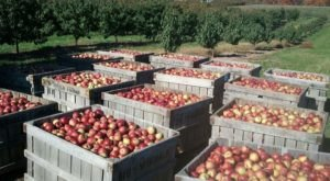 These 5 Charming Apple Orchards In West Virginia Are Great For A Fall Day