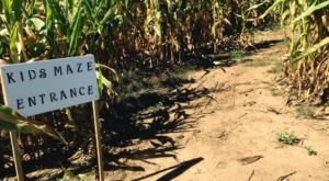 Get Lost In These 8 Awesome Corn Mazes In New Hampshire This Fall