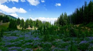 This Mountaintop Meadow In Oregon Is A True Hidden Gem