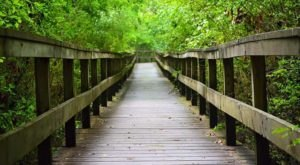 10 Easy Hikes To Add To Your Outdoor Bucket List In Mississippi
