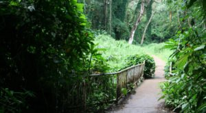 This One Easy Hike In Hawaii Will Lead You Someplace Unforgettable