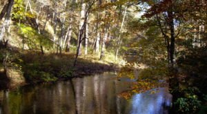 This National Forest Is One Of Alabama's Greatest Treasures