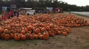 These 5 Charming Pumpkin Patches Near Austin Are Picture Perfect For A Fall Day