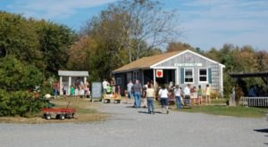 These 11 Farm Stands Have The Best Apple Cider Donuts In New Hampshire