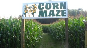Get Lost In These 10 Awesome Corn Mazes In Pennsylvania This Fall