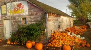 These 9 Charming Pumpkin Patches In Idaho Are Picture Perfect For A Fall Day