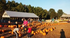 These 4 Charming Pumpkin Patches Near Nashville Are Picture Perfect For A Fall Day