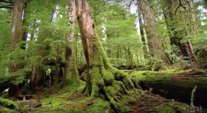 The Gorgeous 500-Year-Old Forest In Oregon You Need To See At Least Once