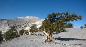 10 Hidden Gems Of Great Basin National Park In Nevada
