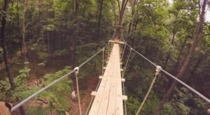 The Stomach-Dropping Canopy Walk You Can Only Find In Connecticut