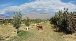 These 5 Charming Apple Orchards In Nevada Are Great For A Fall Day