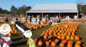 These 10 Charming Pumpkin Patches In Illinois Are Picture Perfect For A Fall Day