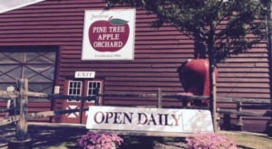 These 9 Charming Apple Orchards In Minnesota Are Great For A Fall Day