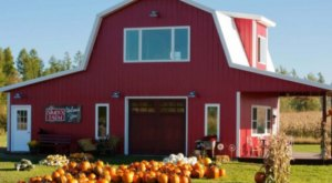 These 12 Charming Pumpkin Patches In Minnesota Are Picture Perfect For A Fall Day