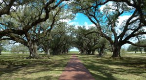 Take These 3 Country Roads Near New Orleans For A Gorgeous Scenic Drive