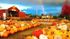 These 10 Charming Pumpkin Patches In Pennsylvania Are Picture Perfect For A Fall Day