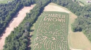 Get Lost In This Awesome Tennessee Corn Maze This Fall