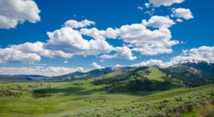 The American Serengeti Is Right Here In Wyoming And You'll Want To Visit