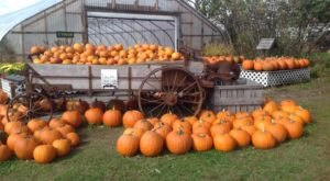 These 8 Charming Pumpkin Patches In New Hampshire Are Picture Perfect For A Fall Day