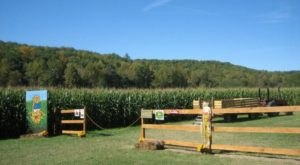 Get Lost In These 10 Awesome Corn Mazes In Georgia This Fall