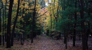 Get Lost In These 11 Stunning State Forests In Ohio