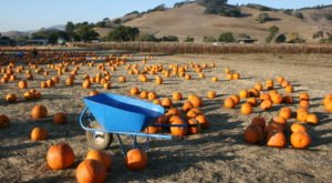 These 8 Charming Pumpkin Patches Around San Francisco Are Picture Perfect For A Fall Day