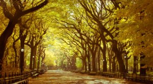 New York's Tunnel Of Trees Is Positively Magical And You Need To Visit