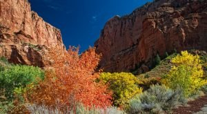 The Unexpected Place In Utah With The Best Fall Foliage