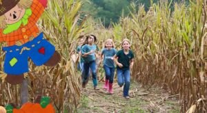 Get Lost In These 11 Awesome Corn Mazes In Mississippi This Fall
