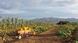 These 10 Charming Pumpkin Patches In Nevada Are Picture Perfect For A Fall Day