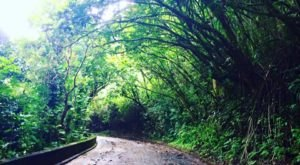 The Haunted Hike In Hawaii Will Send You Running For The Hills