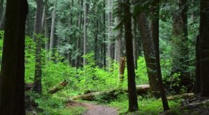 These 10 Nature Trails In Idaho Will Fuel Your Wanderlust