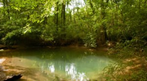 Most People Don't Know These Natural Springs Are Hiding In A Kentucky City