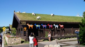 A Quirky Restaurant In Wisconsin, Al Johnson's Is Known For The Adorable Goats On The Roof