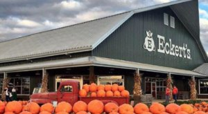 These 10 Charming Pumpkin Patches In Missouri Are Picture Perfect For A Fall Day