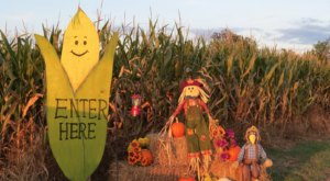 Get Lost In These 11 Awesome Corn Mazes In Missouri This Fall