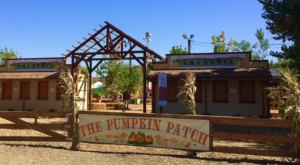These 9 Charming Pumpkin Patches In Southern California Are Picture Perfect For A Fall Day