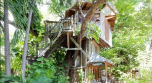 You'll Never Forget Your Stay At This Enchanting Florida Tree House