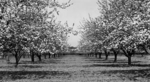 There's Something Special About These 10 Delaware Farms From The Past