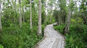 5 Easy Hikes To Add To Your Outdoor Bucket List In New Orleans
