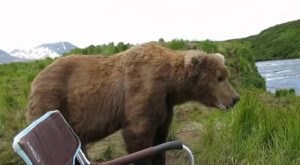 Only In Alaska Can You Camp With Grizzly Bears And Live To Tell About It