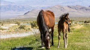 9 Stunning Places You Can See Wild Horses In Nevada