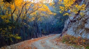 10 Country Roads In Southern California That Are Pure Bliss In The Fall
