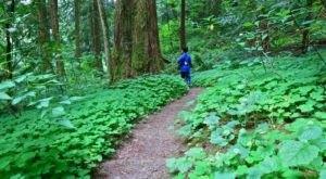 The Beautiful Secret Garden In Portland That's Like A Dream