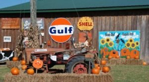 These 13 Charming Pumpkin Patches In Mississippi Are Picture Perfect For A Fall Day