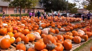 These 7 Charming Pumpkin Patches In New Orleans Are Picture Perfect For A Fall Day